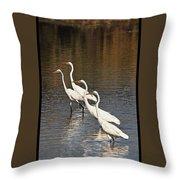Four Egrets Fishing Throw Pillow