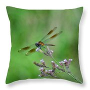 Four-spotted Pennant Throw Pillow