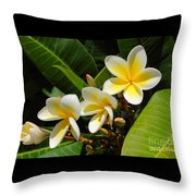 Four Summer Frangipanis Throw Pillow