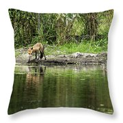 Fox At Water Hole Throw Pillow