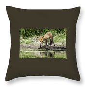 Fox Drink Throw Pillow