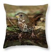 Fox Sparrow Drinking Throw Pillow