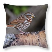 Fox Sparrow Pictures 16 Throw Pillow