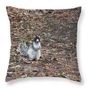 Fox Squirrel Curious Throw Pillow