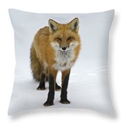 Foxy.. Throw Pillow