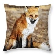 Foxy Throw Pillow by Shane Bechler