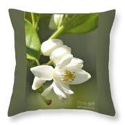 Fragrant Orange Blossoms Throw Pillow