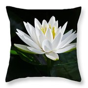 Fragrant Water-lily Throw Pillow
