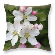 Framed Apple Blossom Throw Pillow