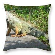 Framed Iguana Throw Pillow