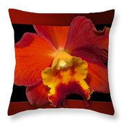 Framed Red Orchid  Throw Pillow