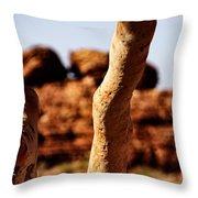 Framed Rock Throw Pillow