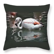 Framingo Throw Pillow