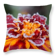 French Marigold Named Durango Red Outlined With Frost Throw Pillow