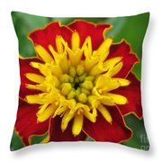 French Marigold Named Solan Throw Pillow