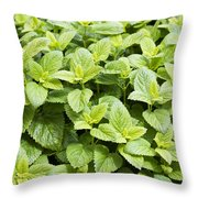 Fresh Mint Throw Pillow