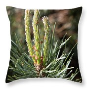 Fresh Pine Sprouts Throw Pillow