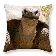 Friendly Tortoise Throw Pillow
