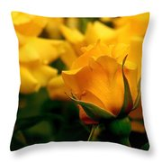 Friendship Roses Throw Pillow by Rona Black