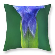 Fringed Gentian With Dew Drop Throw Pillow