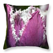 Fringy Throw Pillow