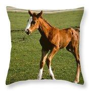 Frisky Colt Throw Pillow