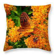 Fritillary On Butterfly Weed Throw Pillow