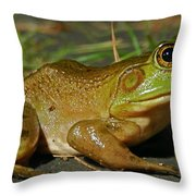 Frog At Night Throw Pillow