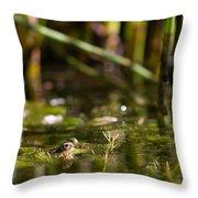 Frog Eyes Throw Pillow