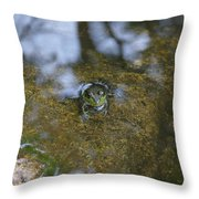 Frog In A Pond Throw Pillow