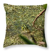 Frog In Pond Throw Pillow