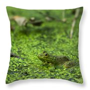 Frog In Swamp 2 Of 3 Throw Pillow