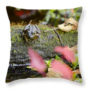 Frog On Log 1 Of 3 Throw Pillow