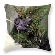 Frog On Moss On Wall Throw Pillow