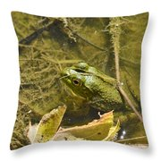 Frog Thinks He's Hidden Under A Twig Throw Pillow