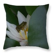 Frog Tucked In A Water Lily Throw Pillow