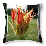From Bud To Bloom - African Blood Lily Throw Pillow