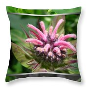 From Bud To Bloom - Bee Balm Named Panorama Pink Throw Pillow