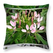 From Bud To Bloom - Cleome Named Pink Queen Throw Pillow