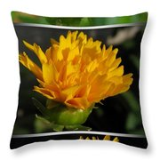 From Bud To Bloom - Coreopsis Named Early Sunrise Throw Pillow