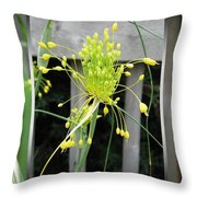 From Bud To Bloom - Fireworks Allium Throw Pillow