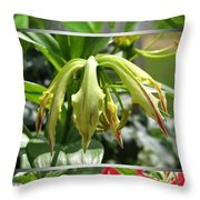 From Bud To Bloom - Gloriosa Named Rothschildiana Throw Pillow