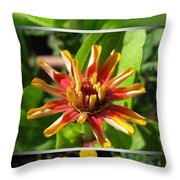 From Bud To Bloom - Zinnia Throw Pillow