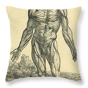 Front Of Male Human Body.anatomical Throw Pillow