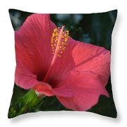 Front Porch Swing Throw Pillow