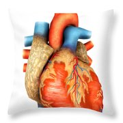 Front View Of Human Heart Throw Pillow by Stocktrek Images