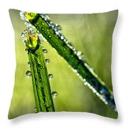 Frost And Dew On Grass Throw Pillow