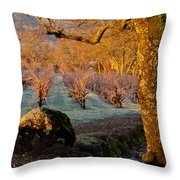 Frost In The Valley Of The Moon Throw Pillow