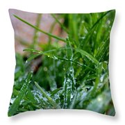Frosted Dew Throw Pillow