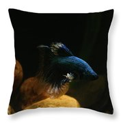 Frosted Fins Throw Pillow